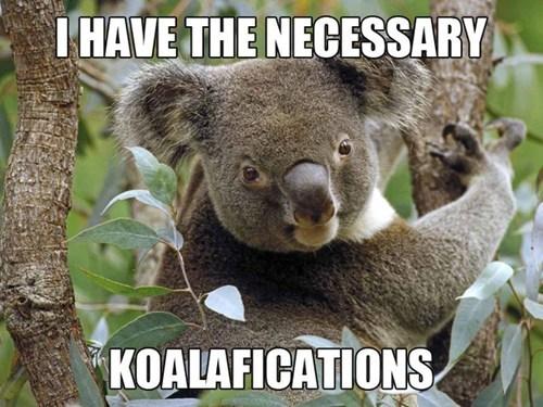 koala,qualifications