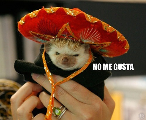 grumpy,hedgehog