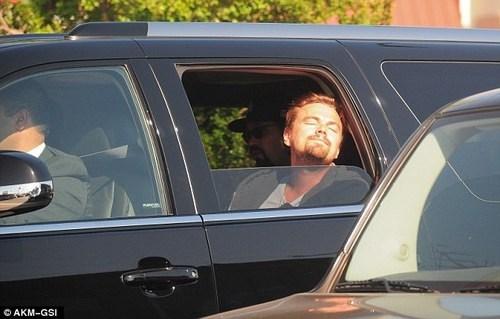 Leo Basking in the Sun