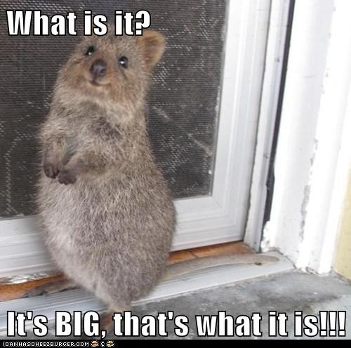 What is it?  It's BIG, that's what it is!!!