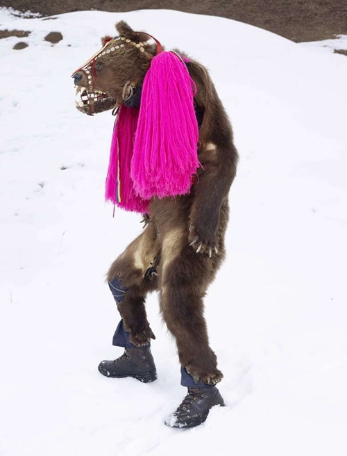 This Bear Knows How to Dress