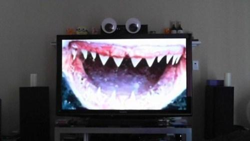 TV,shark,googly eyes,hacked irl