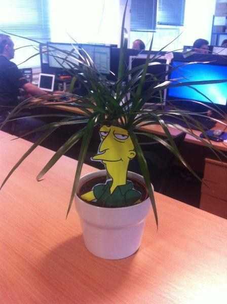 IT humor,plants,the simpsons,monday thru friday,g rated