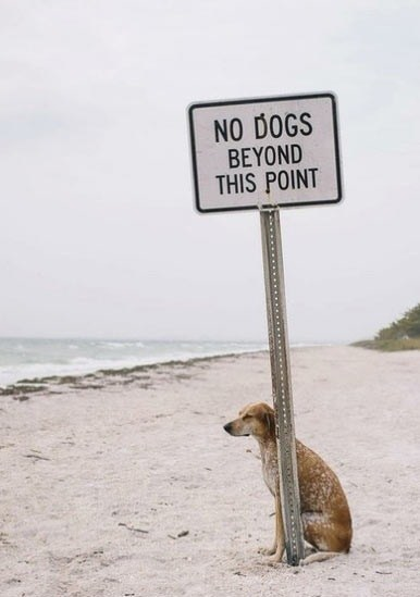 sign,rebel,dogs,we got a badass over here