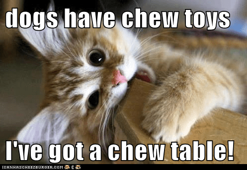 dogs have chew toys  I've got a chew table!