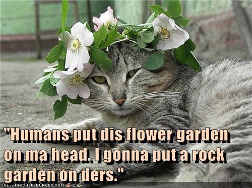 """Humans put dis flower garden on ma head. I gonna put a rock garden on ders."""