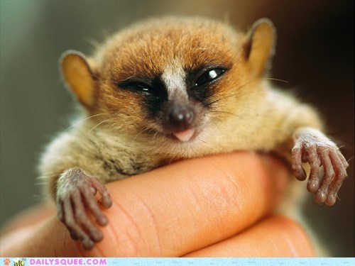 The Daily Squee(ze)
