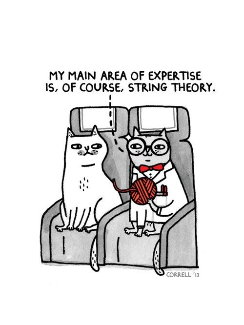 Cat Scientists Are Really Into Physics