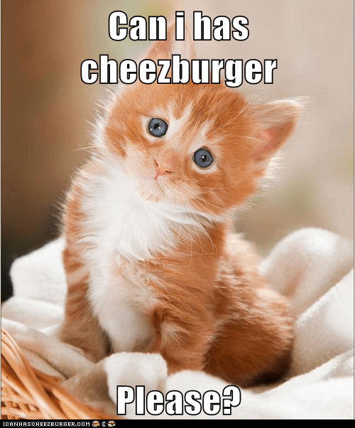 Can i has cheezburger  Please?