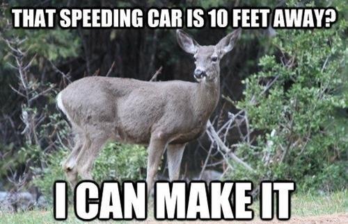 Every Deer Ever