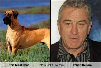 This Great Dane Totally Looks Like Robert De Niro
