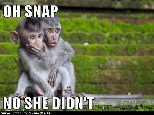 monkeys,oh no she did not