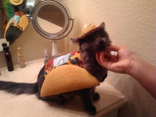 Taco Cat Is a Palindrome