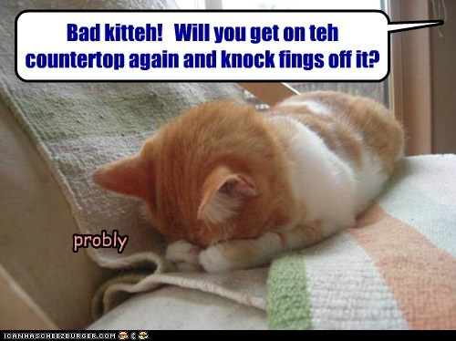 Its wat kittehs DO!