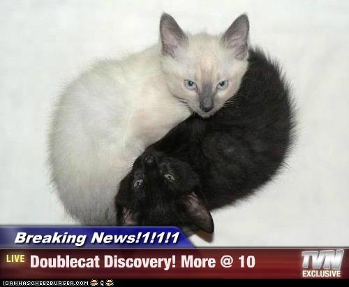 Breaking News!1!1!1 - Doublecat Discovery! More @ 10