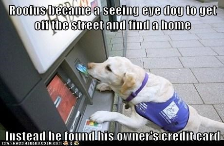 Roofus became a seeing eye dog to get off the street and find a home  Instead he found his owner's credit card