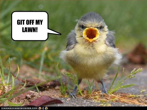 You Grumpy Old Bird