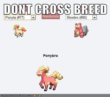 DONT CROSS BREED