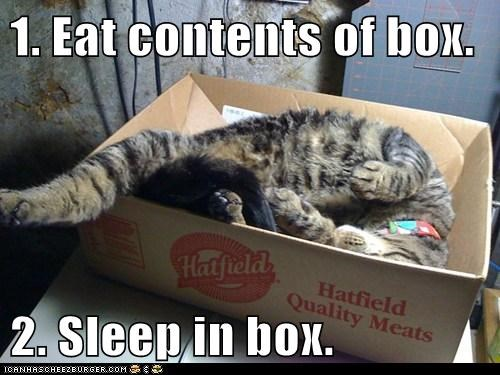 1. Eat contents of box.  2. Sleep in box.