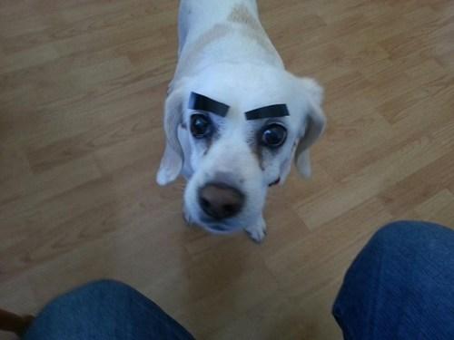 eyebrows,angry eyes