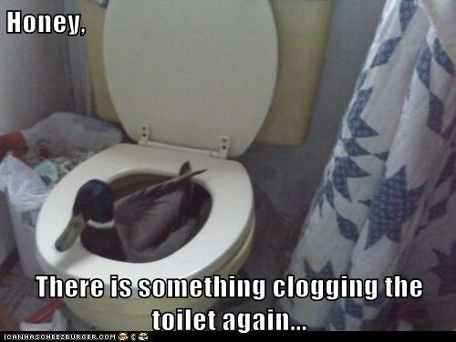 Honey,  There is something clogging the toilet again...