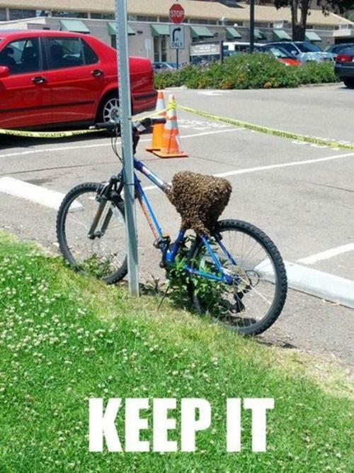 bees,bike,funny,fail nation