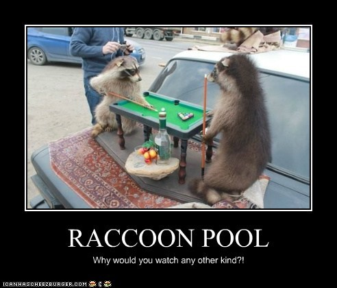RACCOON POOL