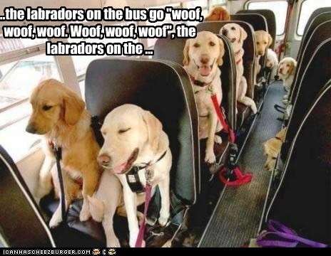 "...the labradors on the bus go ""woof, woof, woof. Woof, woof, woof"", the labradors on the ..."
