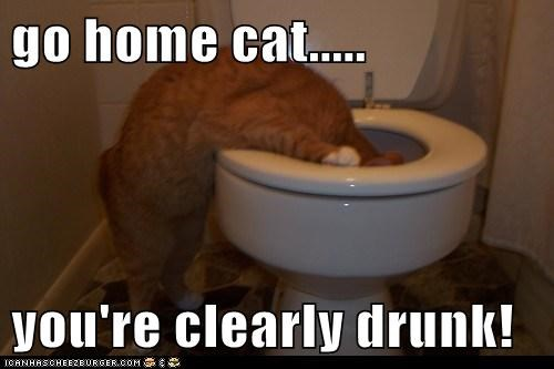 go home cat.....  you're clearly drunk!