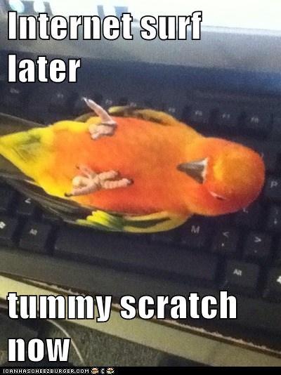 scratch,internet,bird