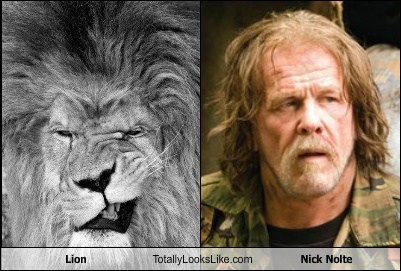 Lion Totally Looks Like Nick Nolte