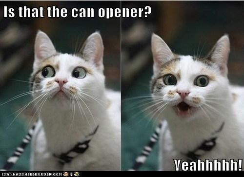 Is that the can opener?  Yeahhhhh!