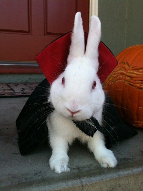 costume,albino,bunny,dracula