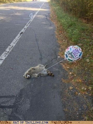 get well soon,raccoon,funny