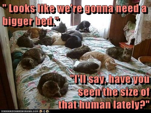 """"""" Looks like we're gonna need a bigger bed.""""  """"I'll say, have you                                                         seen the size of                                                          that human lately?"""""""