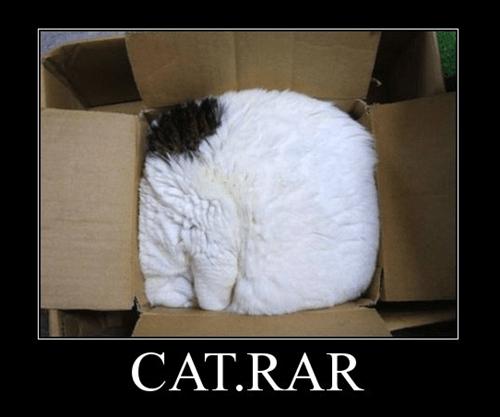 cat,unzip,rar,funny