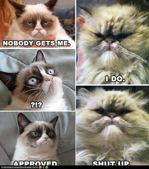 Grumpy Cat Has Met Her Match