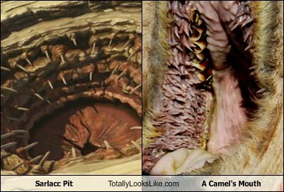camel's mouth,totally looks like,sarlacc pit,funny
