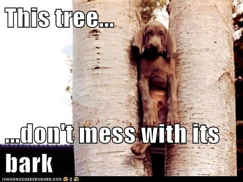 This tree...  ...don't mess with its bark