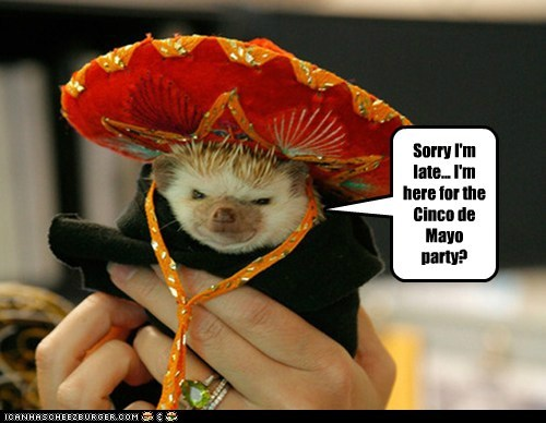 Sorry I'm late... I'm here for the Cinco de Mayo party?