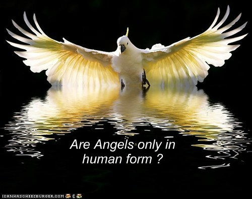 Are Angels only in human form ?