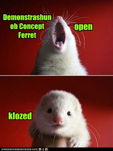 Demonstrashun ob Concept Ferret