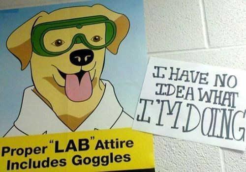 dogs,signs,puns,lab safety