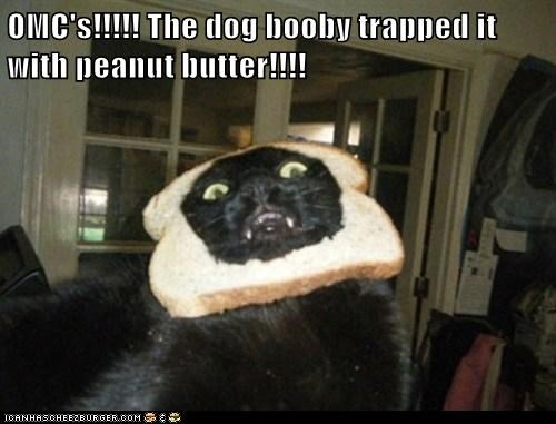 OMC's!!!!! The dog booby trapped it with peanut butter!!!!