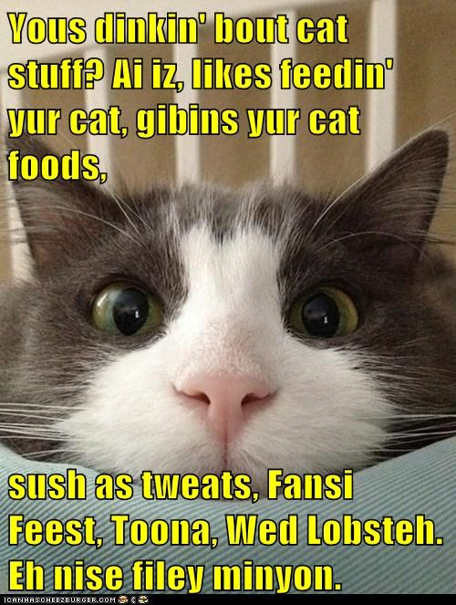 Yous dinkin' bout cat stuff? Ai iz, likes feedin' yur cat, gibins yur cat foods,  sush as tweats, Fansi Feest, Toona, Wed Lobsteh. Eh nise filey minyon.