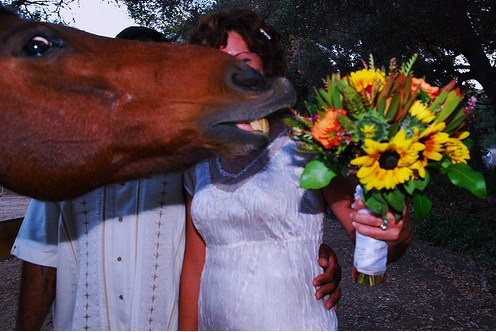 Dramatic Horse Would Like Some Flowers