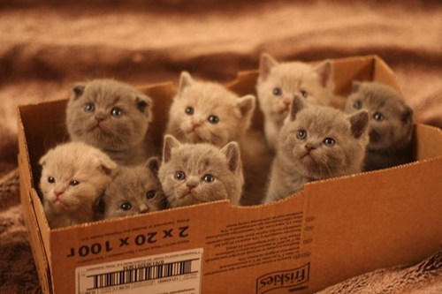 Feeling Down? Here's a Box Full of Kittens!
