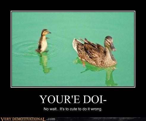 ducks,cute,doing it wrong,funny
