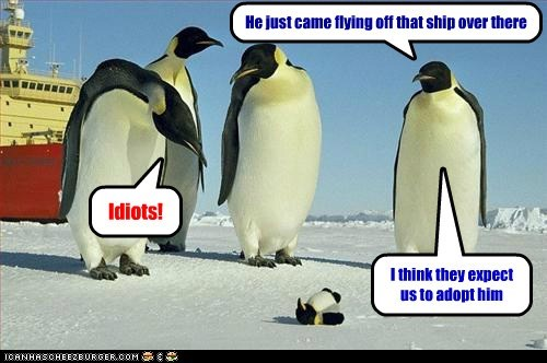 baby,penguins,funny