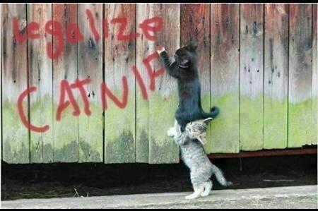 catnip,graffiti,legalize,funny